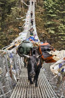 Lastentier auf der Hillary Hängebrücke in Nepal