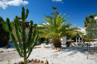 Tropical trees palms and huge cactus in backyard of house, sunny day clear blue sky, no people, photo taken in Costa Blanca, Spain