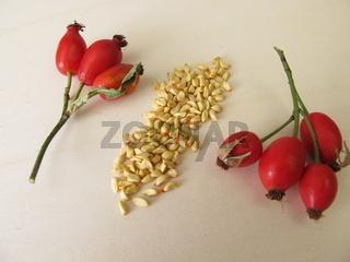 Hagebuttensamen – Samen von der Wildfrucht Hagebutte