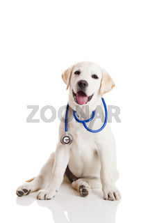 Veterinarian dog