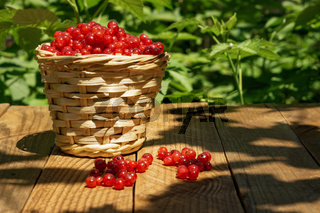 basket with currants
