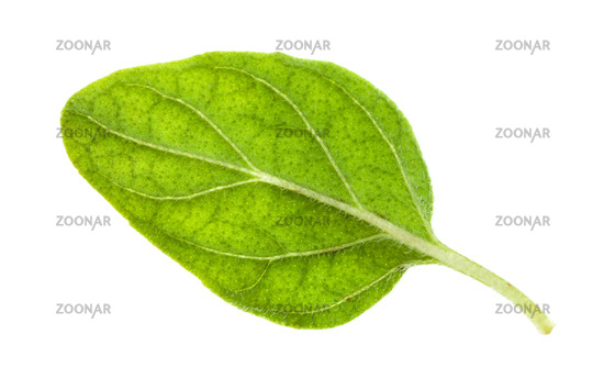natural leaf of Oregano herb isolated on white