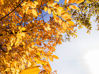 Orange leaves close to the River, in Autumn