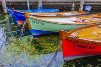 Bunte Fischerboote im Hafen von Torbole am Gardasee, Trient, Italien