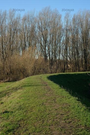 Weg auf dem Deich, bewaldet