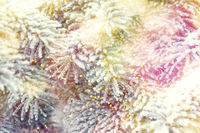 Christmas winter fir tree scenic background. Branches covered with snow in the frost. Falling sparkles and lights bokeh closeup. Soft vintage toned blue, gold and purple. Greeting card background