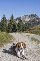 Beaglewanderung zum Kranzhorn