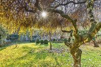Herbst im Park | Autumn in the park