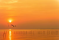 Pair of seagulls in sky at sunset in Thailand