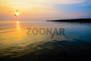 Beautiful sunset two birds flying above the sea
