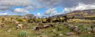 beautiful landscape of Bale Mountain