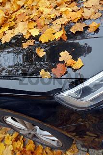 Herbstlaub auf Auto