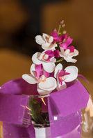 kleine farbintensive Orchidee in dekoriertem Übertopf