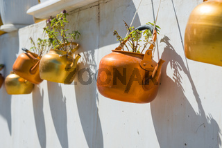 Copper kettles with plants hanging on white wall