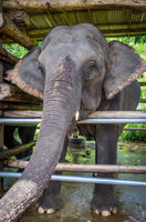 Elephant in protected park, Chiang Mai, Thailand