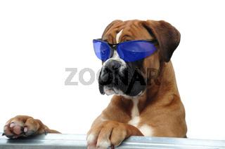 Boxer 297