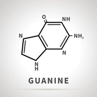 Chemical structure of Guanine, one of the four main nucleobases, simple icon