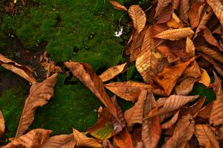 Herbstlaub auf dem Moosbett