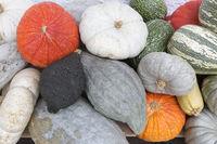 Mehrere verschiedene Kürbisse im Herbst