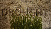 Drought and grass cracked dirt