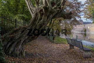 Herbst im Ahauser Schlossgarten