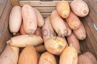 Pink Banana Kürbisse in einer Holzkiste