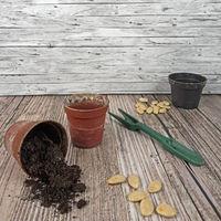 Hintergrund Aussaat von Gemüse für den Garten  im Frühjahr