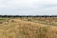 Ehemalige Eisenbahnbrücke über die Elbe bei Dömitz