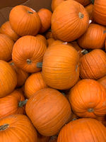 Abstract Several Pumpkin Patch Background