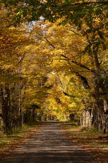 Secluded Narrow Lane Road Tree Leaves Autumn Season Fall Colors