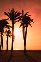 Burning sky and silhouette of palm trees