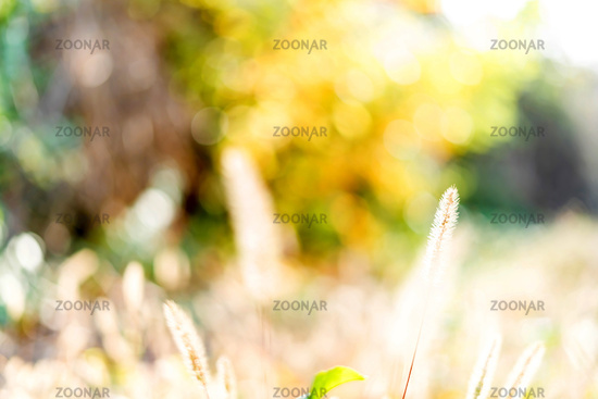 Closeup photo of plants in the sunlight