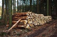 Baumstämme am Waldweg