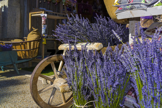 Dekoration mit typischen Lavendelbüschen
