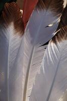 Weissbraune Vogelfedern
