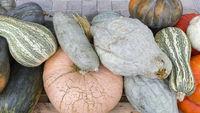 Mehrere verschiedene Kürbisse im Herbst im Format 16 zu 9