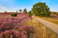 Lueneburger Heide Wanderweg