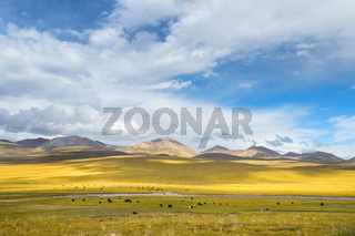 beautiful grassland scenery,