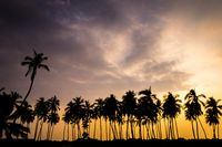 Palm Tree Silhouettes at Sunset in Hawaii