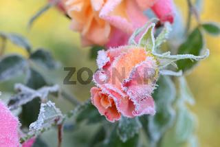 Blumen 251