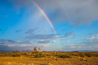 The rainbow over desert in Namibia