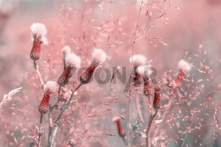 Beautiful fluffy wildflowers in the dreamy meadow. Pink pastel toned. Nature background. Greeting card template. Copy space