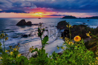 California Sunset with Wildflowers, Northern California, USA