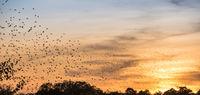 Abendstimmung mit Zugvögeln