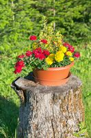Pot of flowers on a stump