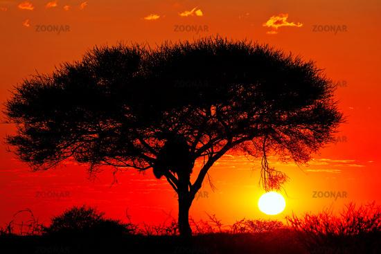 Sonnenaufgang, Etosha-Nationalpark, Namibia,   Sunrise, Etosha National Park, Namibia