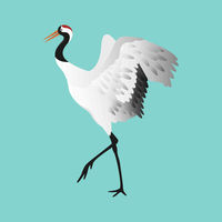 Japanese dancing red-crowned crane in different poses isolated