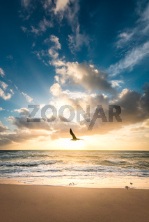 bird flying over the beach with the ocean in the background