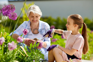 grandmother and girl planting flowers at garden
