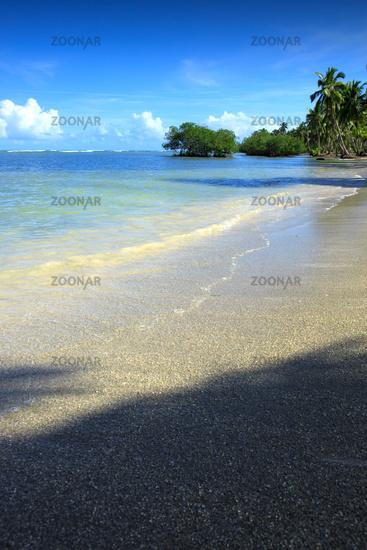 Coconut Palm trees on caribbean sandy beach.